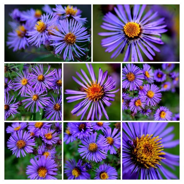 ultimele-flori